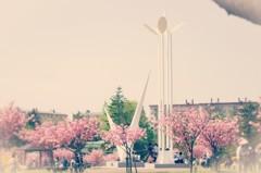 白鳥台の桜まつり