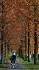 枯れゆく樹 いそいそと漕ぐ 通学路