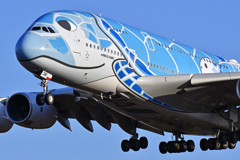 FLYING HONU!!
