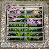 側溝の花壇