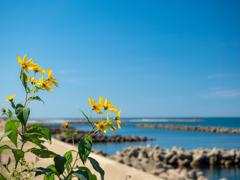 日本海と花