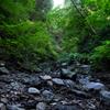 高尾の渓流