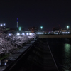 浦安夜景 境川の夜桜 2