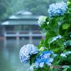 涼亭と紫陽花