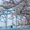 鉄道風景 桜と東西線