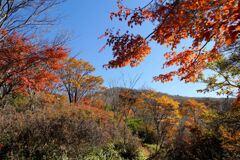 紅葉の荒山