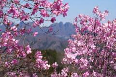 ヒトツバナ咲く西上州の春