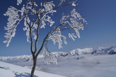 霧氷咲く上越の冬