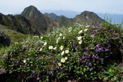 岩稜の花畑