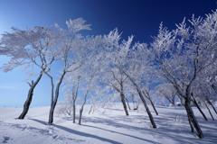 青空に咲く霧氷