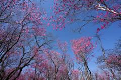 ピンク色の天井