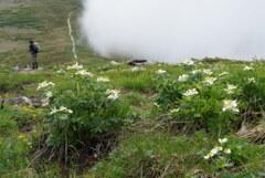 雲迫る花畑