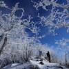 霧氷覆う赤城駒ケ岳