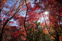 陽だまりのモミジ谷