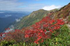 紅葉と茂倉岳