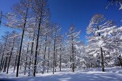 おとぎの森 冬