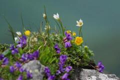 高山の花盛