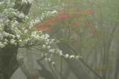 霧の中の紅白