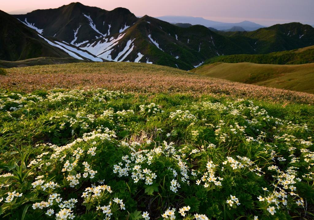 一面に花咲く谷川主脈