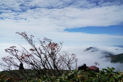 滝雲掛かる秋の谷川