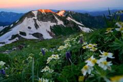 朝焼けの旭岳