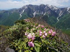 シャクナゲ咲く初夏の白毛門