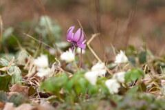 春のコラボ