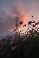 夕焼け雲を仰いで