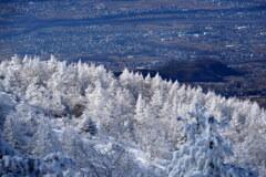 白銀のカラマツ林