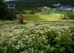 初秋のアサマ2000スキー場