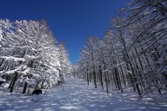 雪景色の通り道
