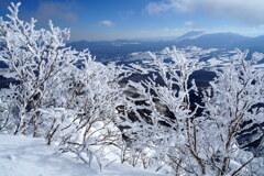 霧氷の奥に浅間山