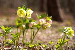 春の森から