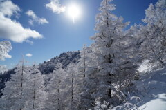 霧氷のカラマツ林
