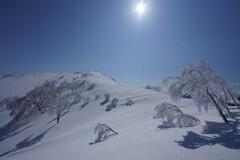 柔らかな雪景色