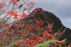 赤い実映える大源太山