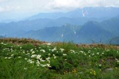 尾根を飾る花畑