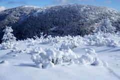 可愛い雪のミニミニ