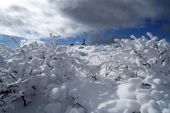 小烏帽子岳の綿雪
