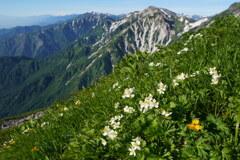 花の北アルプス