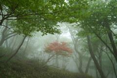 霧の中に1本