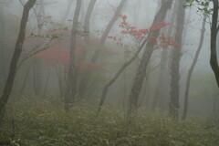 霧の中に咲く