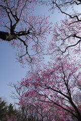 淡桃色の空