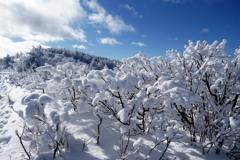 綿雪の尾根
