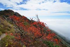 秋色付く谷川