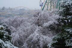 桜咲く雪の遊園地