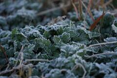 霜のデコレーション
