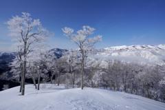 霧氷花咲く東谷山