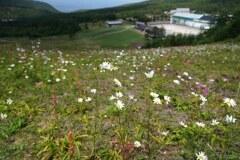 花咲くゲレンデ