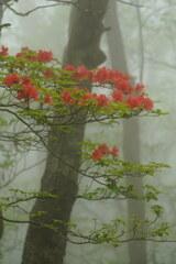 霧に映える
